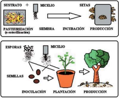Formas_de_cultivo