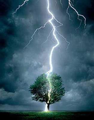 tormentas-rayo-arbol